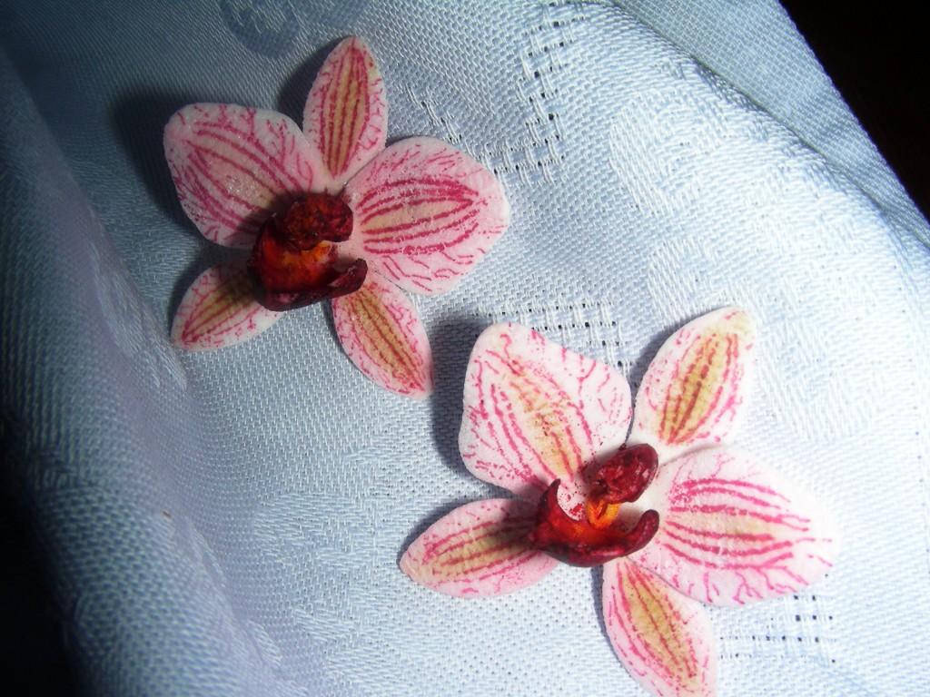 Mini-Orchidee
