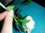 Rose binden