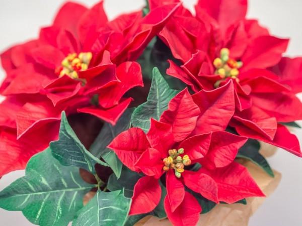 Weihnachtsstern aus Blütenpaste