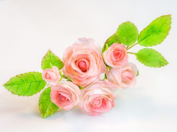 Easiest Rose Ever Vintage Röschen