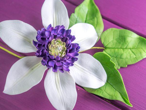 Clematis aus Blütenpaste