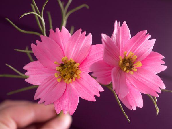 Cosmos aus Blütenpaste