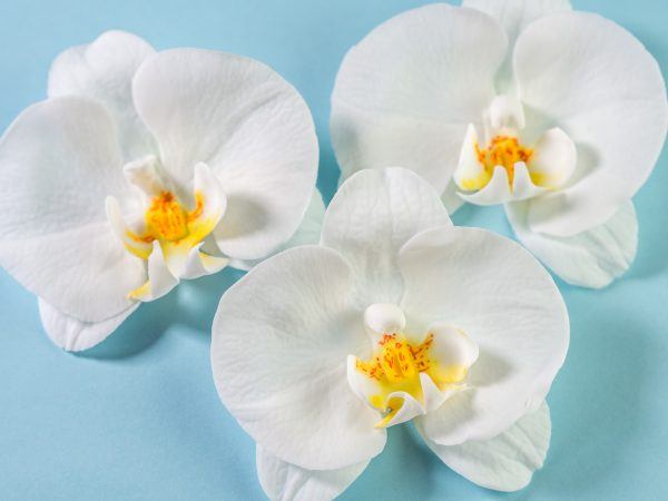 kreatives Pop-Up Event Ferratum Orchideen