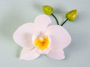 Zuckerblume Orchidee aus Blütenpaste Zuckerorchidee Kurs