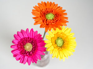 Gerbera Tutorial – bunte Blumen aus Blütenpaste {Video}