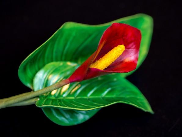 Calla Tutorial: Calla aus Blütenpaste in 7 Farbvariationen