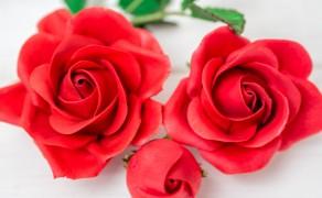 Rose, einfach (5 Petal)