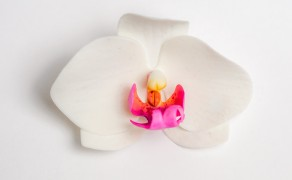 Orchidee, ungedrahtet (Phalaenopsis)