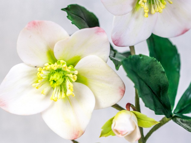Anleitung für eine Christrose aus Blütenpaste {Video} **