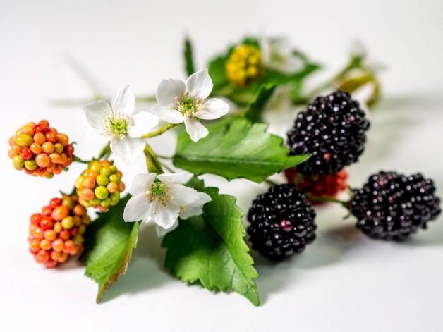 Brombeeren aus Blütenpaste