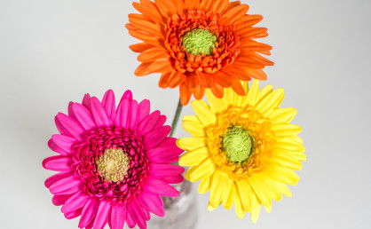 Gerbera Tutorial – bunte Blumen aus Blütenpaste {Video}