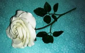 Rose, alt (Einzelblatt)