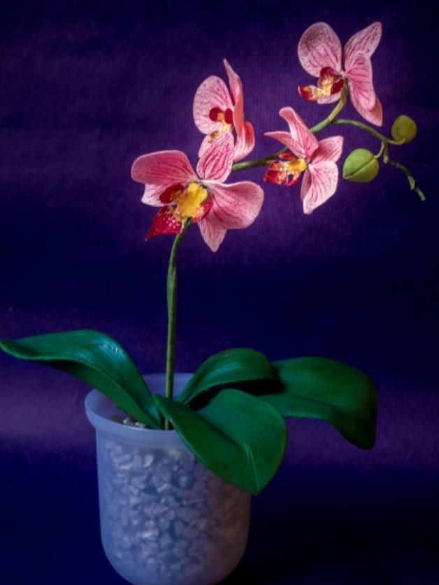 Orchidee aus Blütenpaste